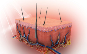 3D image of skin and hair