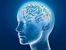 L-threonine and cognitive function