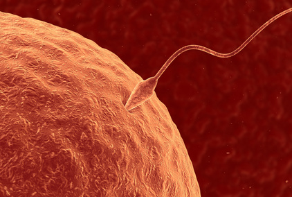 amino acids promote successful fertilisation