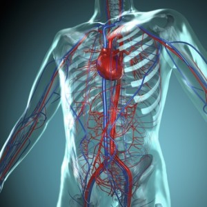 Systematic and Cardiopulmonary Circulation