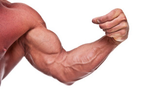 leucine reduces muscle wastage
