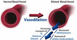 vasodilation effect of nitric oxide whcih increases blood flow throughout the body haas multiple health benefits